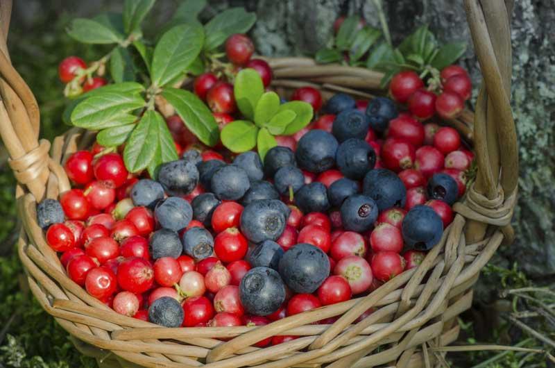 Frutos-del-bosque-para-tart