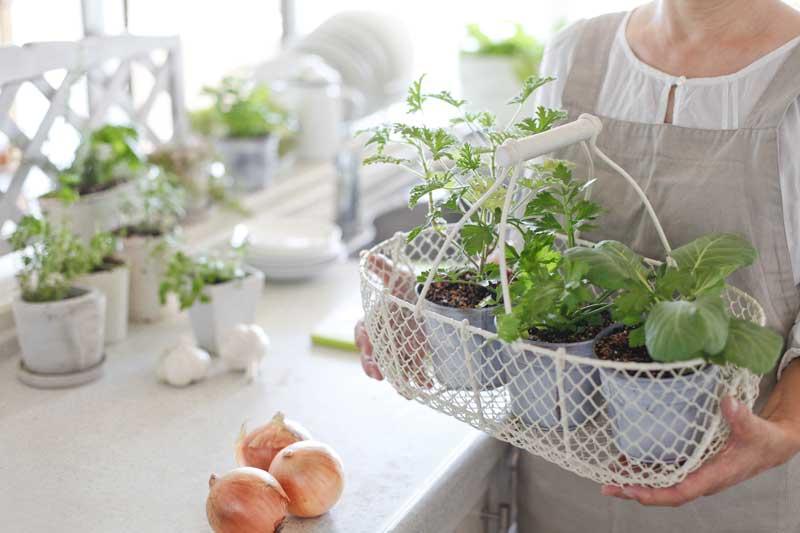 plantas-aromaticas-cocina