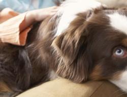 aspiradoras para mascotas